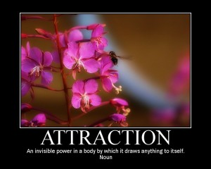 aprender a ligar - atraccion