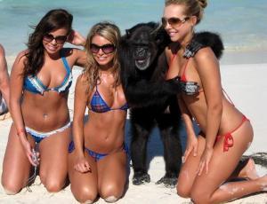 No hagas el mono, aprende a seducir